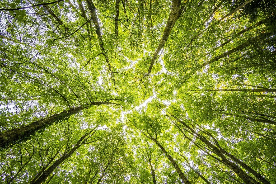A Tree's Intrinsic Rules can Dictate it's Leaf Size